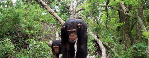 7 Days Double trek Gorillas in Uganda and Rwanda