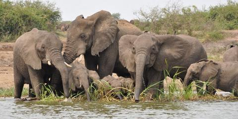 Uganda Super Safari 14 Days with camping tours,group budget safaris