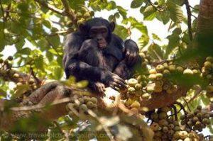 7 Days Double Gorillas Trek in Uganda and Rwanda