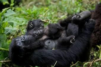 1 Day Gorilla Trekking Tour