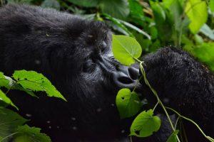 Book your Rwanda 3 Day Express Safari with Africa treasures