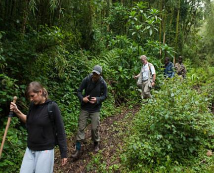 Gorilla Trekking Buhoma Sector-Bwindi Impenetrable National Park