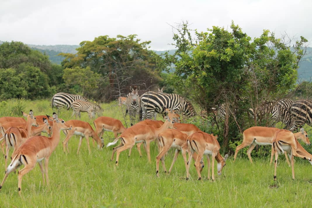 Lake Mburo National Park -Game drives,Birding,Boat Cruise