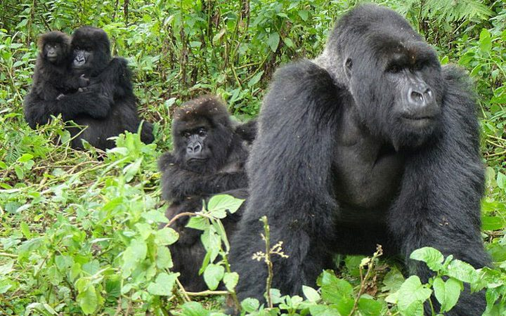 2 Days Gorilla Trekking Bwindi National Park