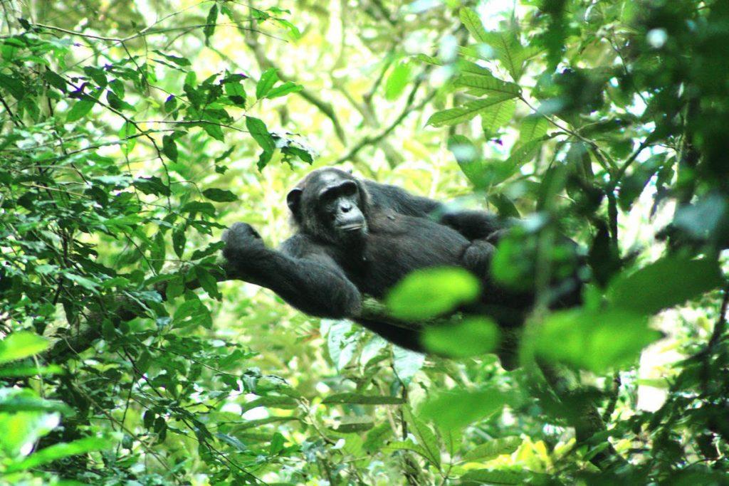 2 Days Gorilla Trekking Mgahinga National Park Uganda